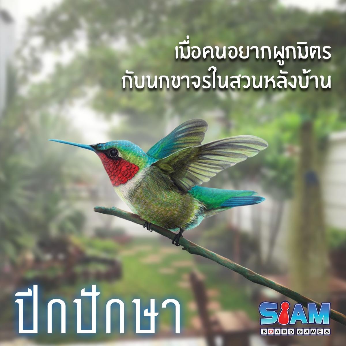 เมื่อคนอยากผูกมิตรกับนกขาจรหลังบ้าน – ปีกปักษา